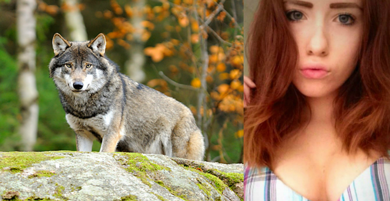 varg i stockholm